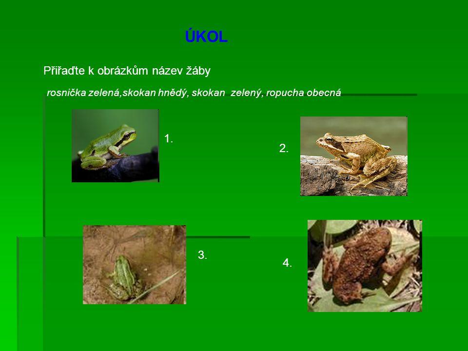 ÚKOL Přiřaďte k obrázkům název žáby