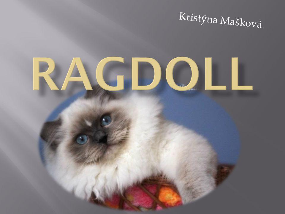 Kristýna Mašková Ragdoll