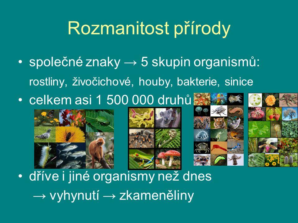 Rozmanitost přírody společné znaky → 5 skupin organismů: