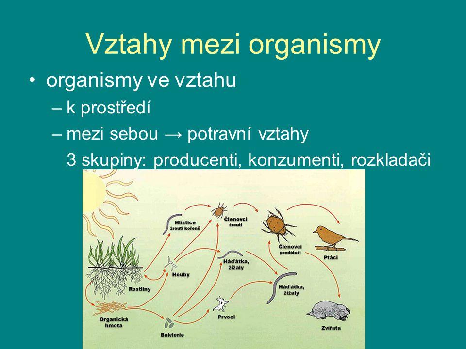 Vztahy mezi organismy organismy ve vztahu k prostředí