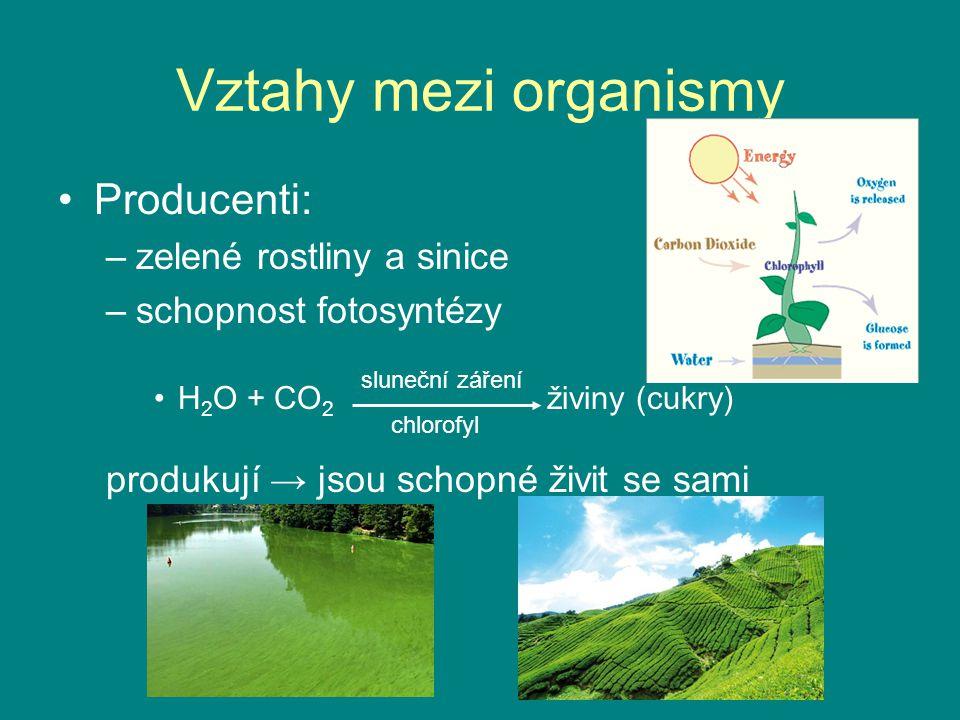 Vztahy mezi organismy Producenti: zelené rostliny a sinice