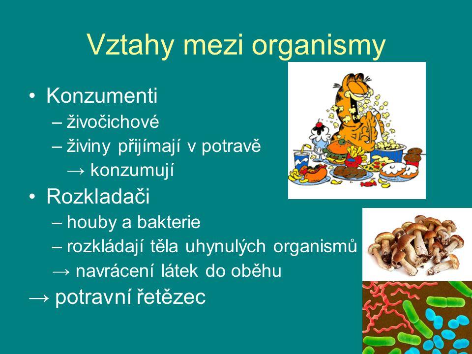 Vztahy mezi organismy Konzumenti Rozkladači → potravní řetězec