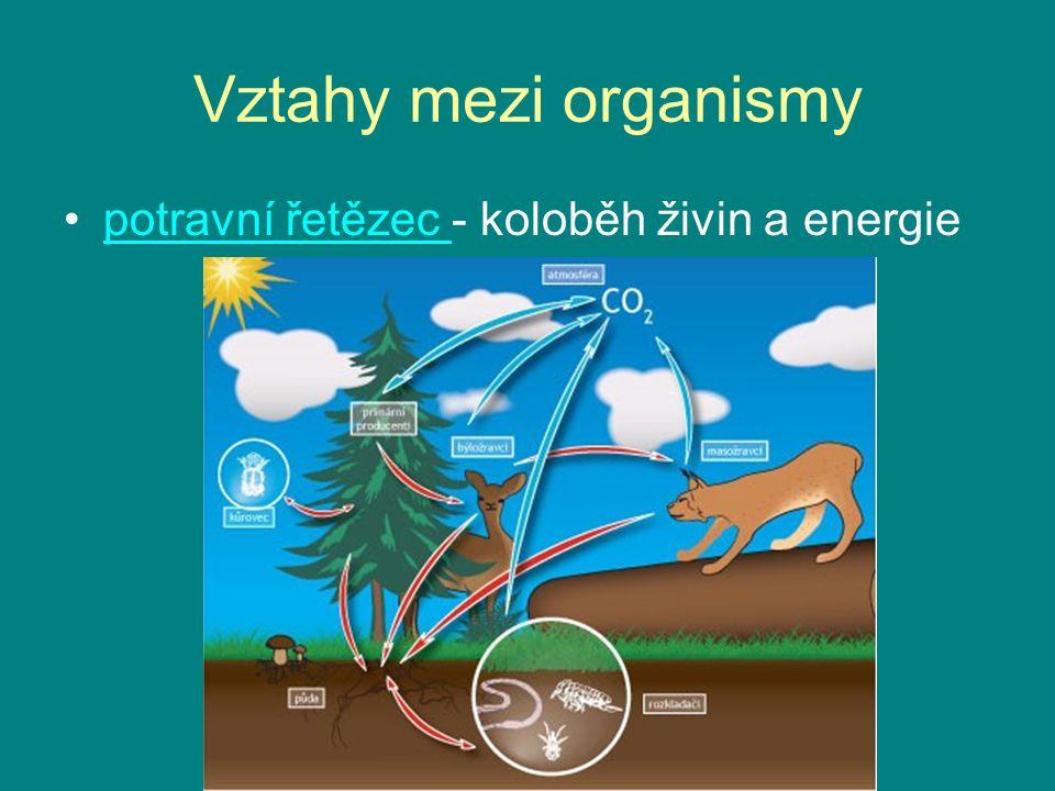 Vztahy mezi organismy potravní řetězec - koloběh živin a energie