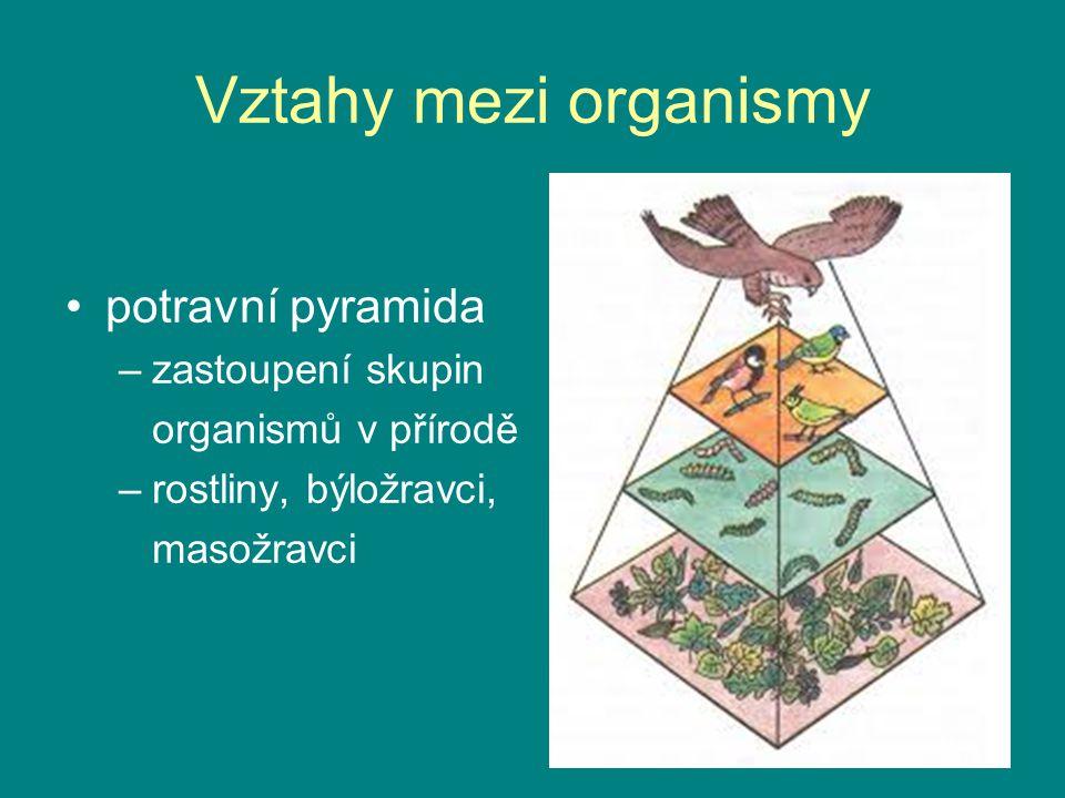 Vztahy mezi organismy potravní pyramida zastoupení skupin