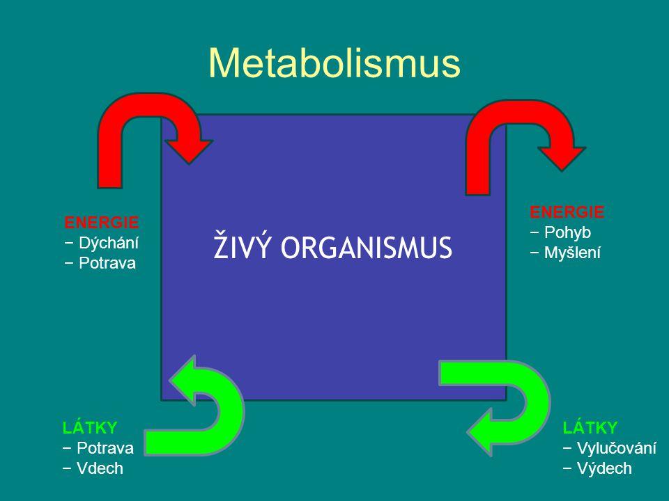 Metabolismus ŽIVÝ ORGANISMUS ENERGIE − Pohyb − Myšlení ENERGIE