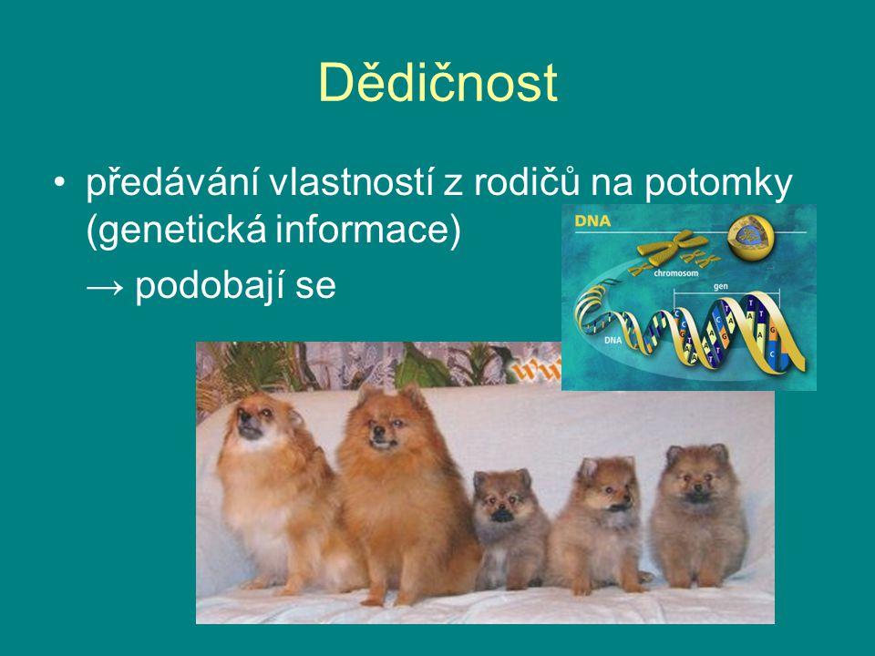 Dědičnost předávání vlastností z rodičů na potomky (genetická informace) → podobají se