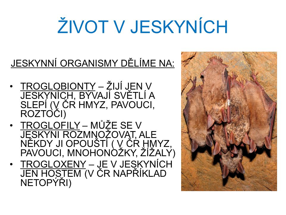 JESKYNNÍ ORGANISMY DĚLÍME NA: