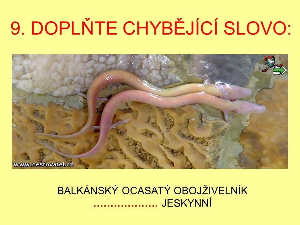 9. DOPLŇTE CHYBĚJÍCÍ SLOVO: