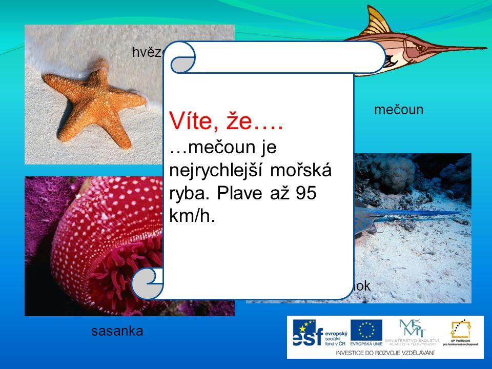 Víte, že…. …mečoun je nejrychlejší mořská ryba. Plave až 95 km/h.