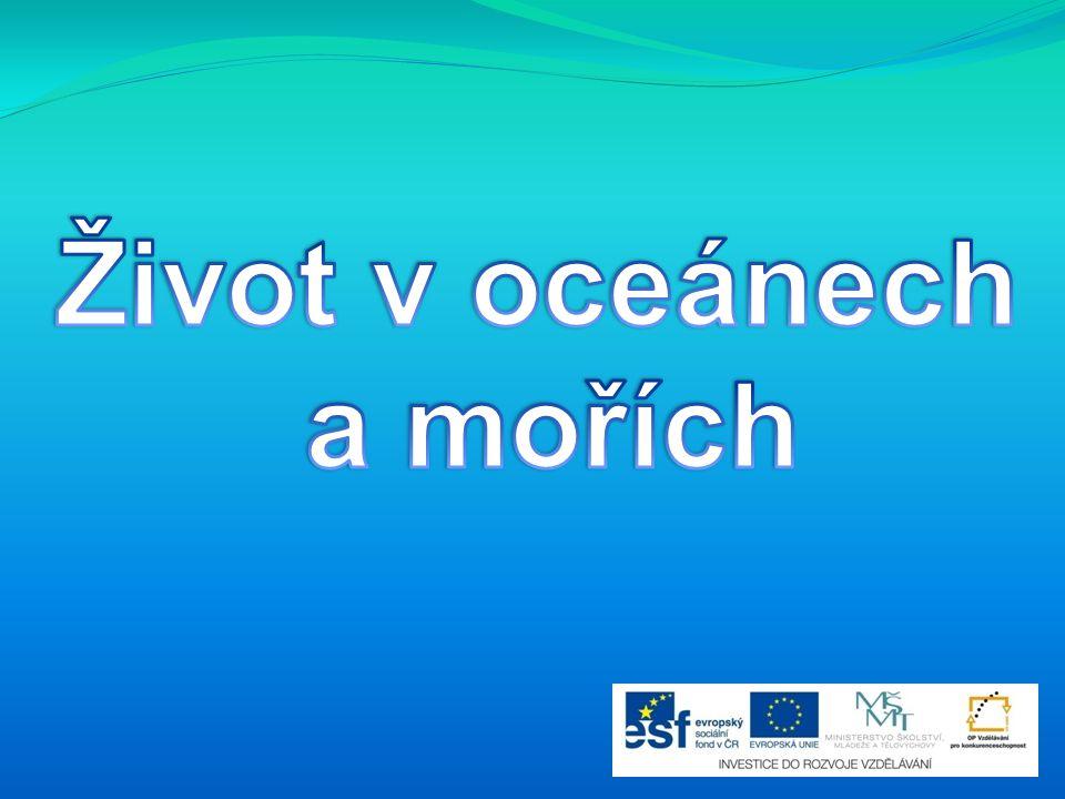 Život v oceánech a mořích