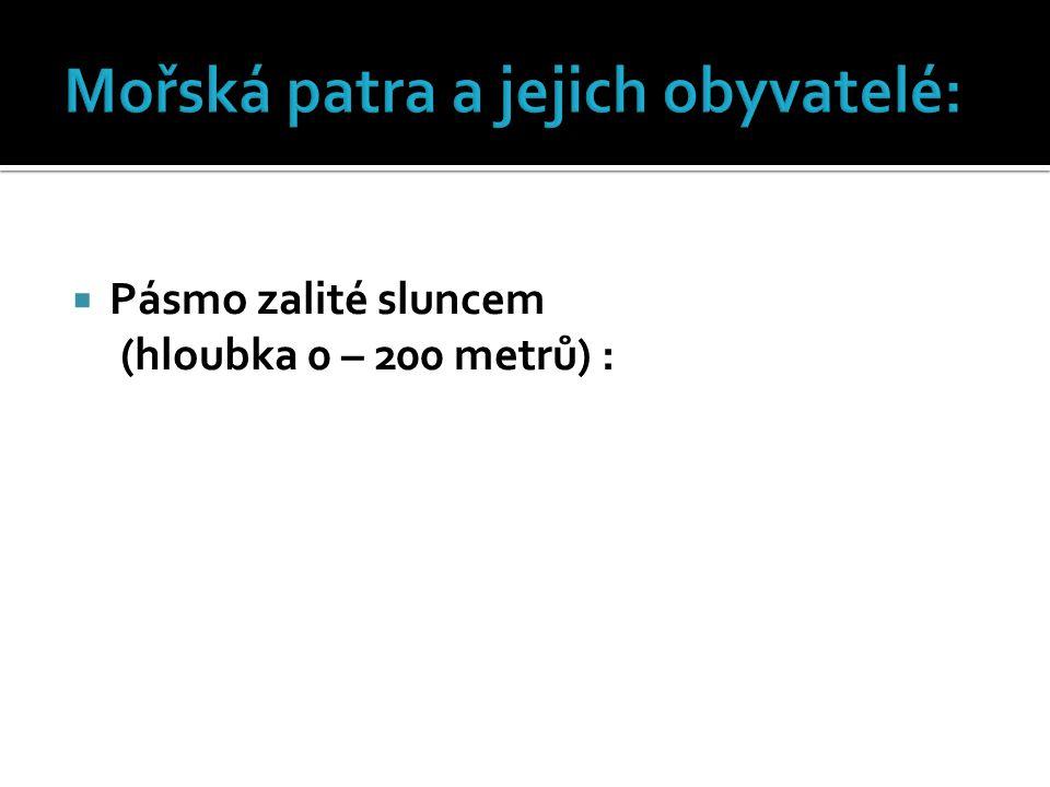 Mořská patra a jejich obyvatelé: