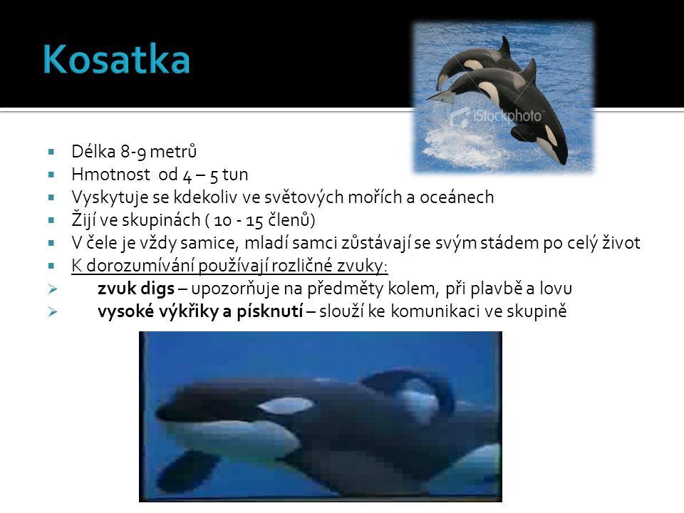 Kosatka Délka 8-9 metrů Hmotnost od 4 – 5 tun