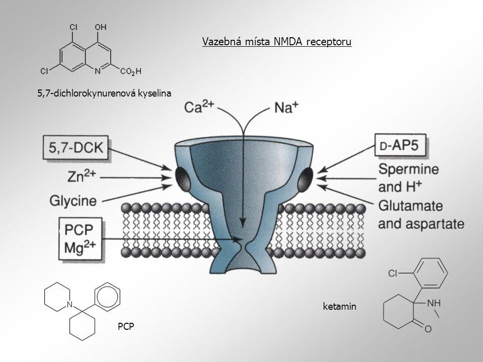 Vazebná místa NMDA receptoru
