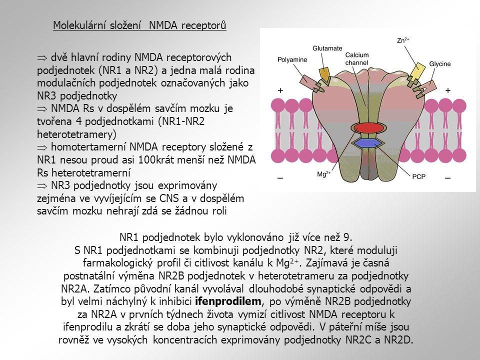 Molekulární složení NMDA receptorů