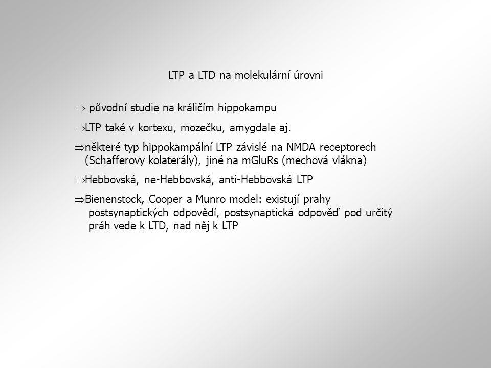LTP a LTD na molekulární úrovni