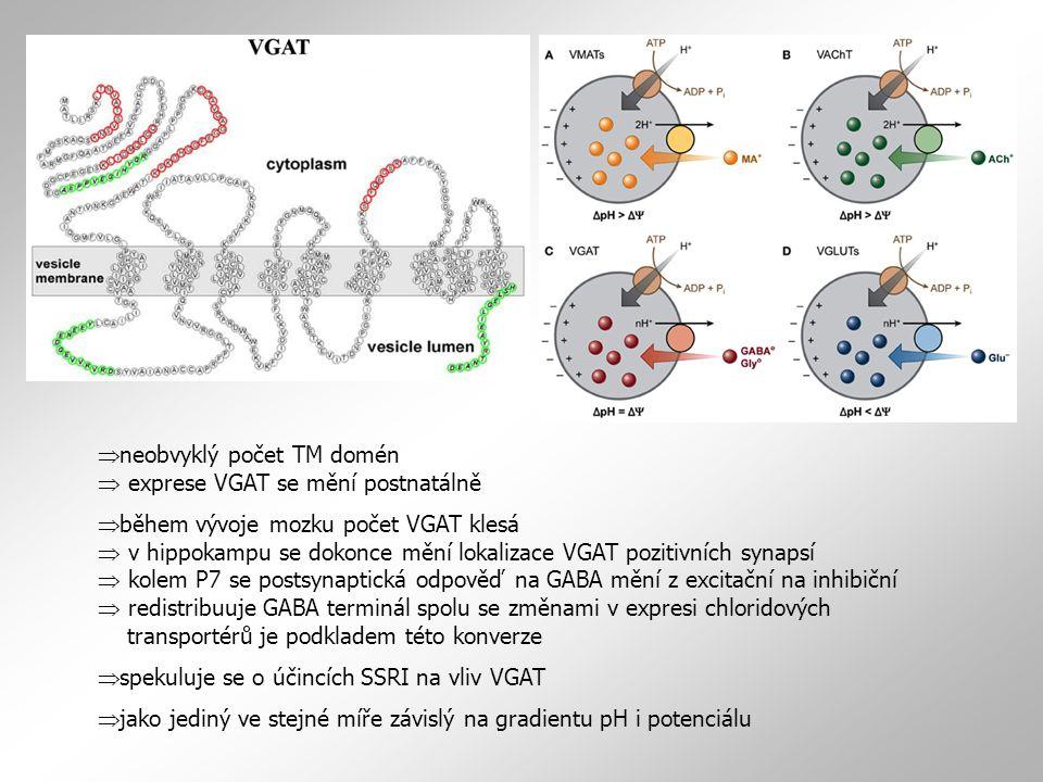 neobvyklý počet TM domén  exprese VGAT se mění postnatálně