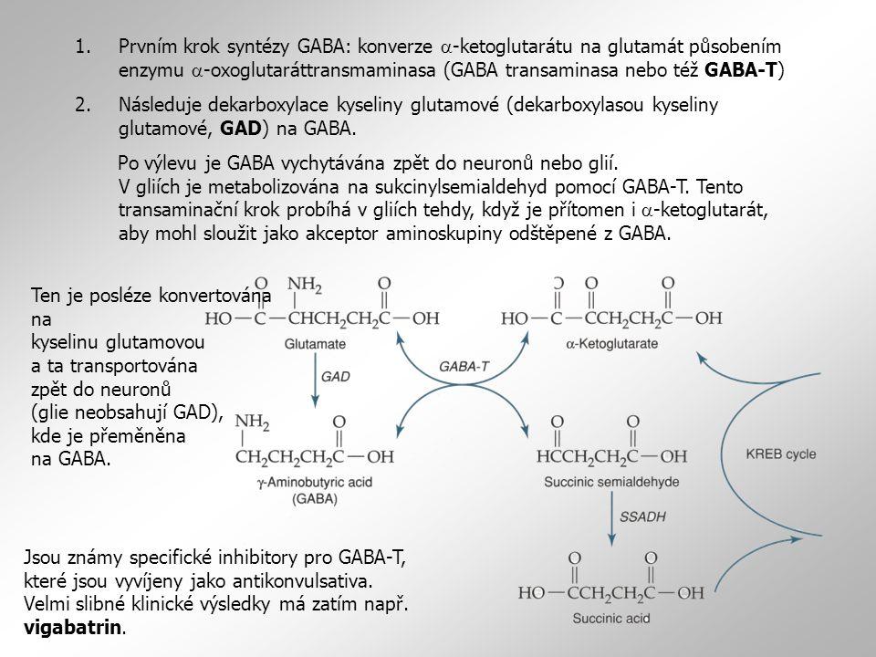 Prvním krok syntézy GABA: konverze a-ketoglutarátu na glutamát působením enzymu a-oxoglutaráttransmaminasa (GABA transaminasa nebo též GABA-T)