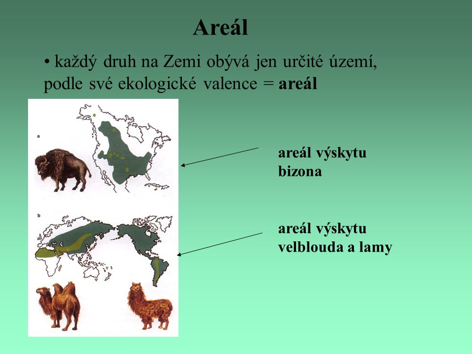 Areál každý druh na Zemi obývá jen určité území, podle své ekologické valence = areál. areál výskytu bizona.