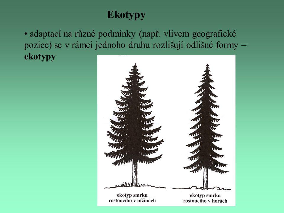 Ekotypy adaptací na různé podmínky (např.