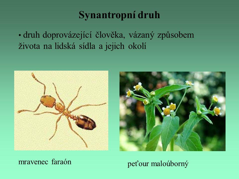 Synantropní druh druh doprovázející člověka, vázaný způsobem života na lidská sídla a jejich okolí.