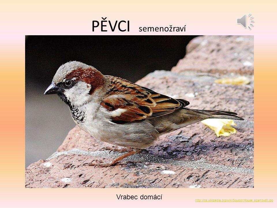 PĚVCI semenožraví Vrabec domácí