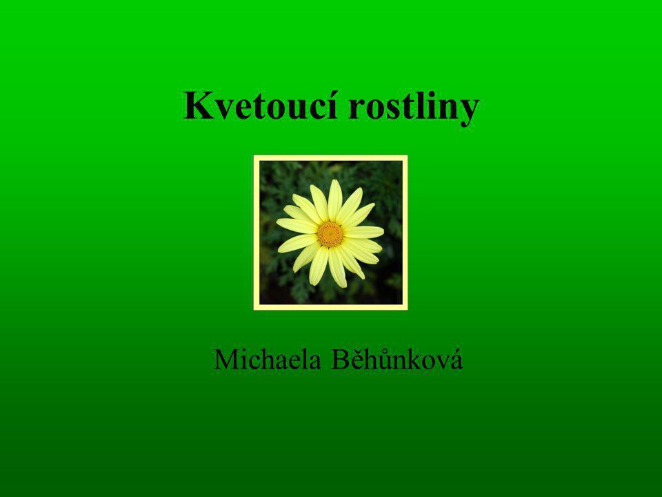 Kvetoucí rostliny Michaela Běhůnková