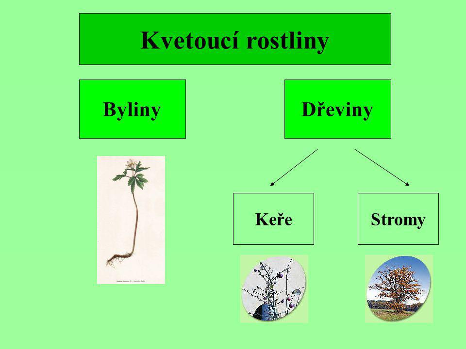 Kvetoucí rostliny Byliny Dřeviny Keře Stromy