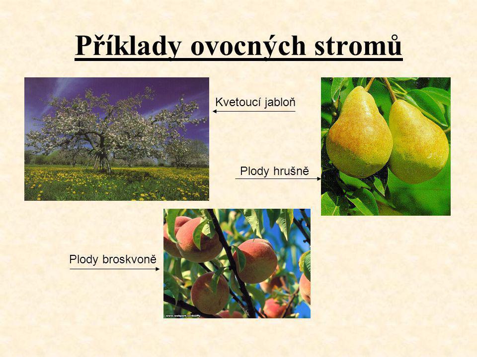 Příklady ovocných stromů