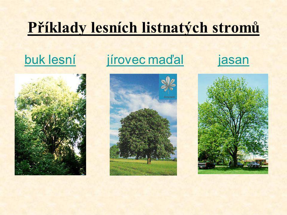Příklady lesních listnatých stromů