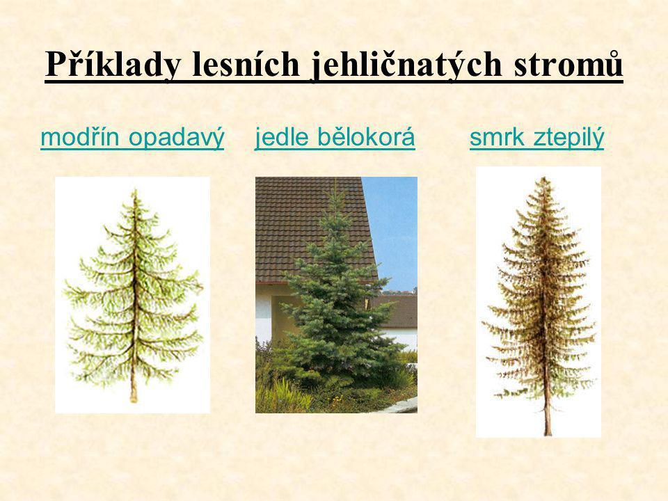 Příklady lesních jehličnatých stromů