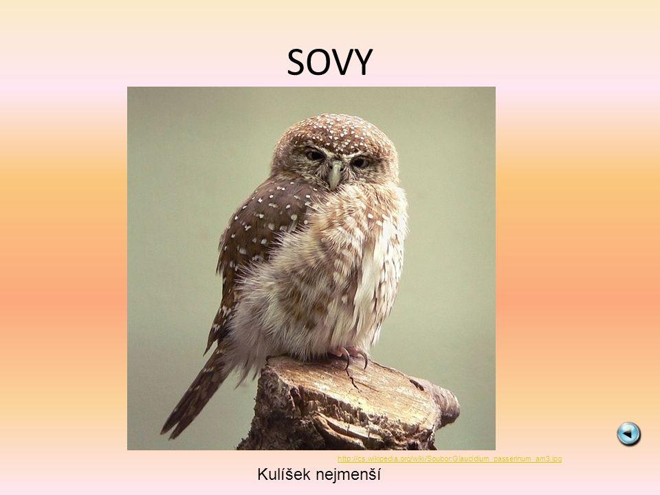 SOVY http://cs.wikipedia.org/wiki/Soubor:Glaucidium_passerinum_am3.jpg Kulíšek nejmenší