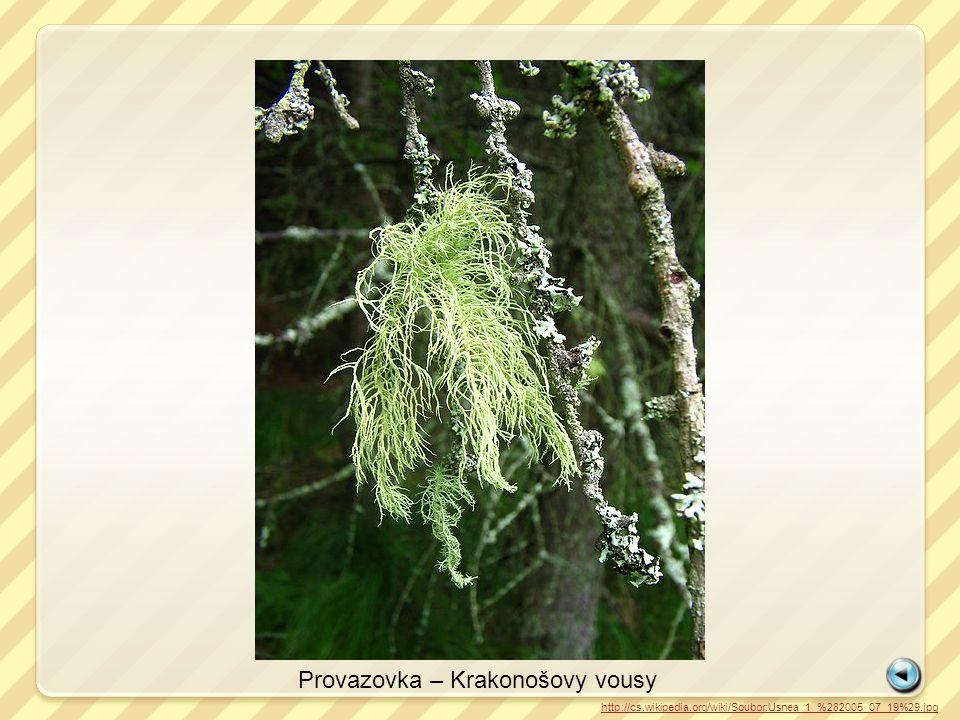 Provazovka – Krakonošovy vousy