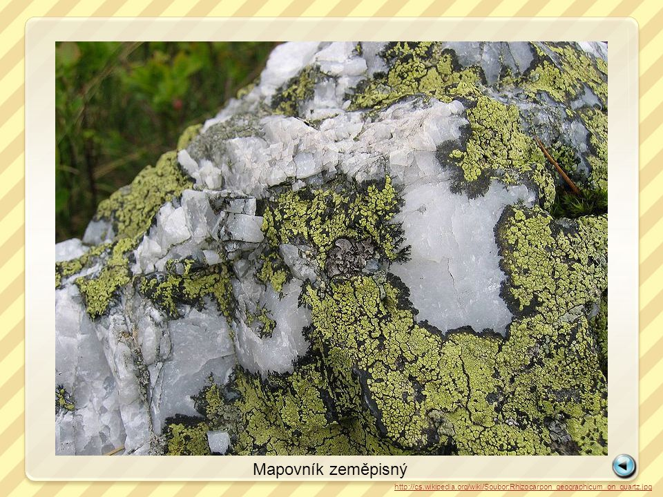 Mapovník zeměpisný http://cs.wikipedia.org/wiki/Soubor:Rhizocarpon_geographicum_on_quartz.jpg