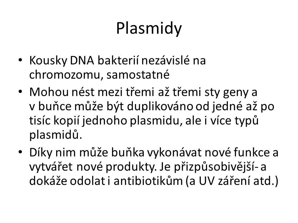 Plasmidy Kousky DNA bakterií nezávislé na chromozomu, samostatné