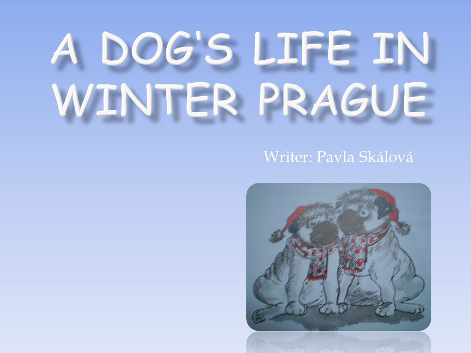 A Dog's Life in Winter Prague