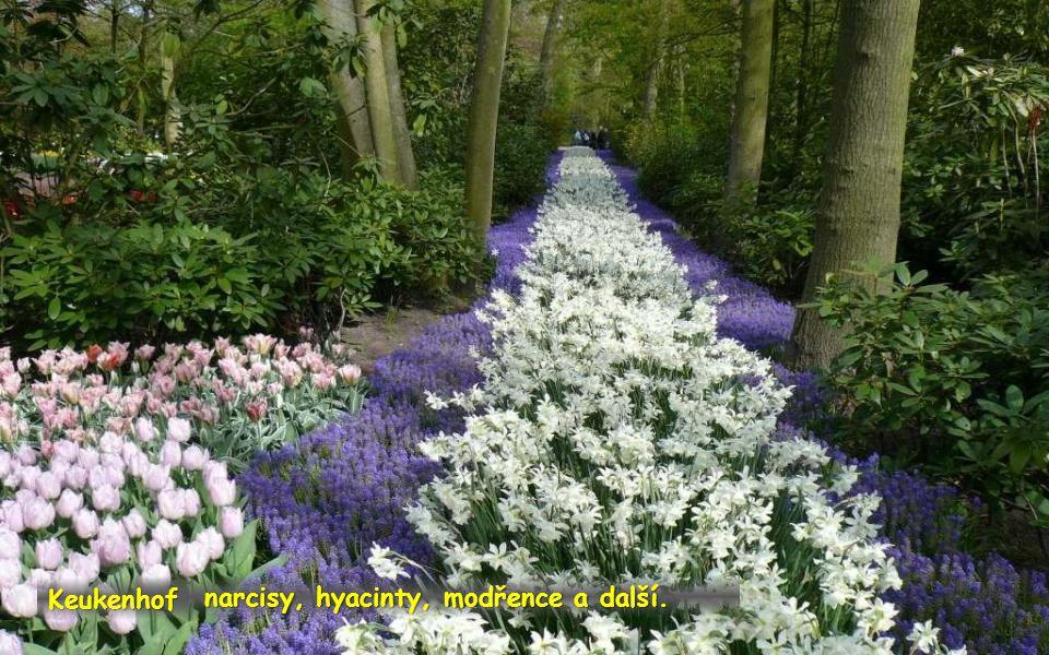 narcisy, hyacinty, modřence a další.