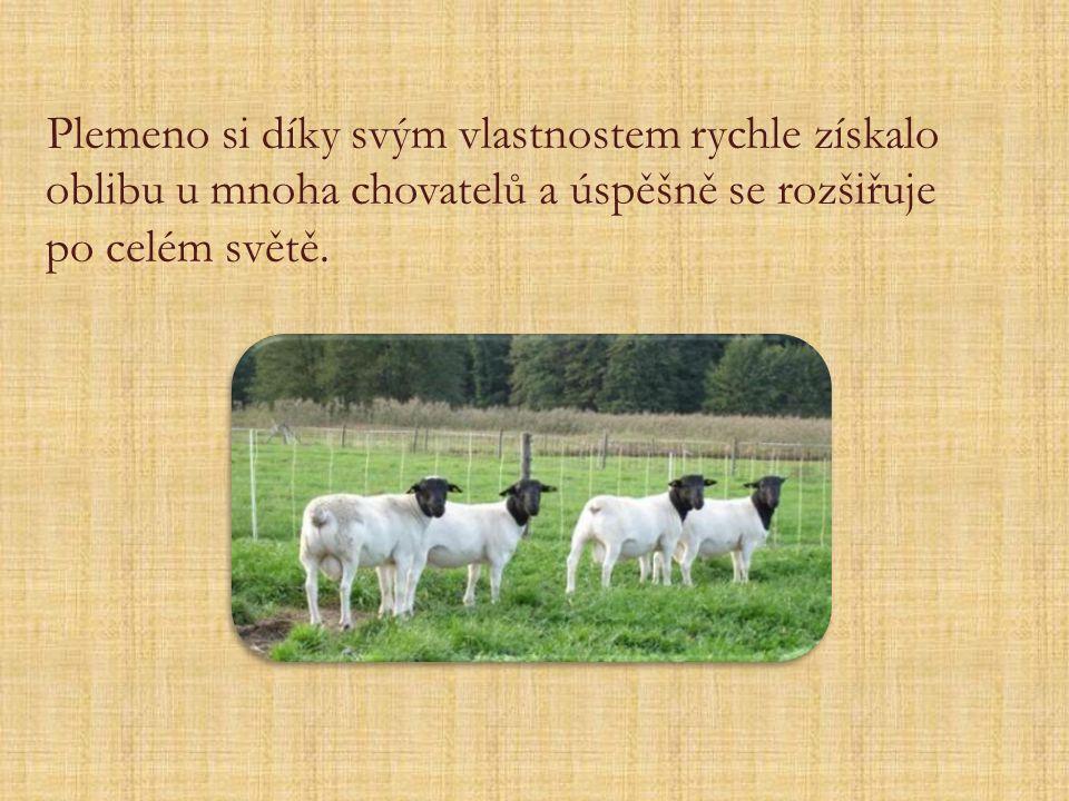 Plemeno si díky svým vlastnostem rychle získalo oblibu u mnoha chovatelů a úspěšně se rozšiřuje po celém světě.