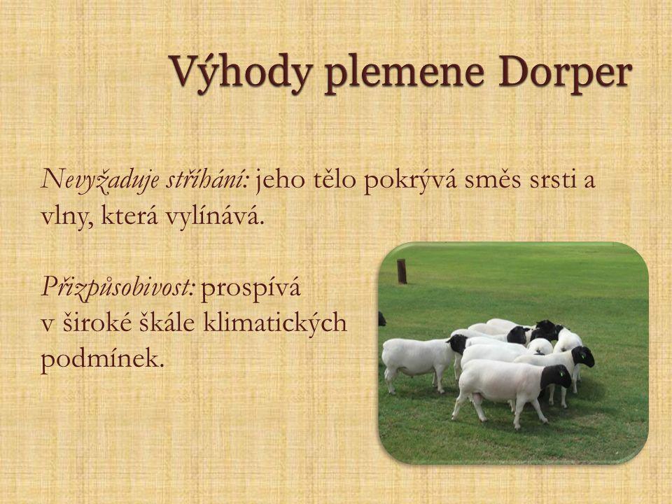 Výhody plemene Dorper Nevyžaduje stříhání: jeho tělo pokrývá směs srsti a vlny, která vylínává. Přizpůsobivost: prospívá.