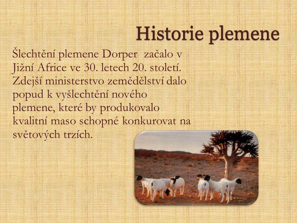 Historie plemene