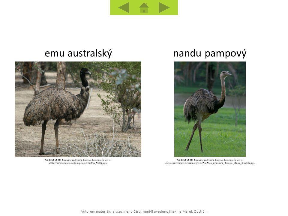 emu australský nandu pampový