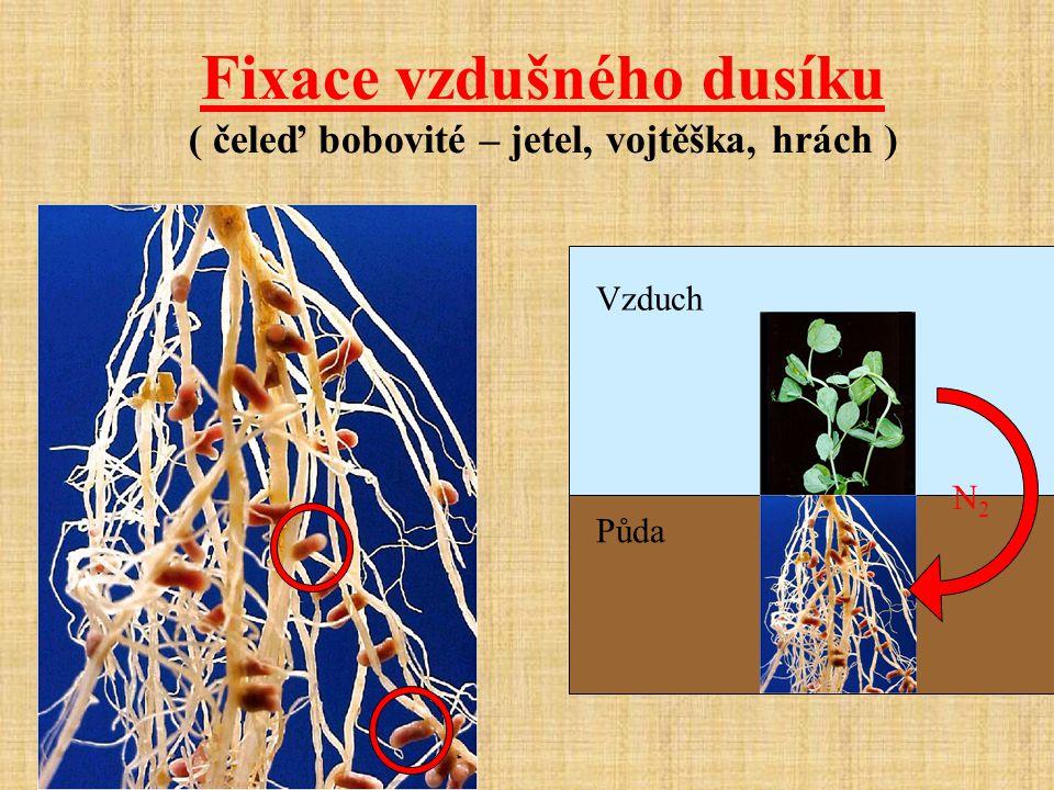 Fixace vzdušného dusíku ( čeleď bobovité – jetel, vojtěška, hrách )