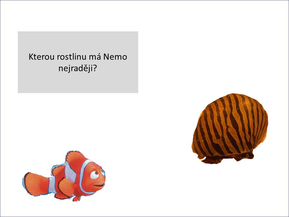 Kterou rostlinu má Nemo nejraději