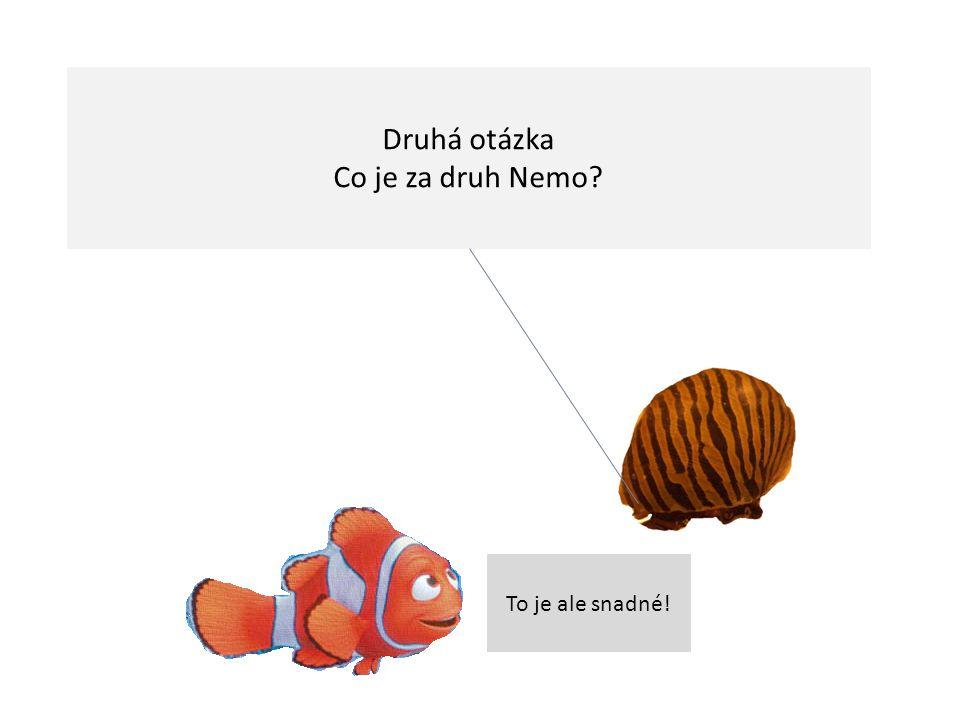 Druhá otázka Co je za druh Nemo To je ale snadné!