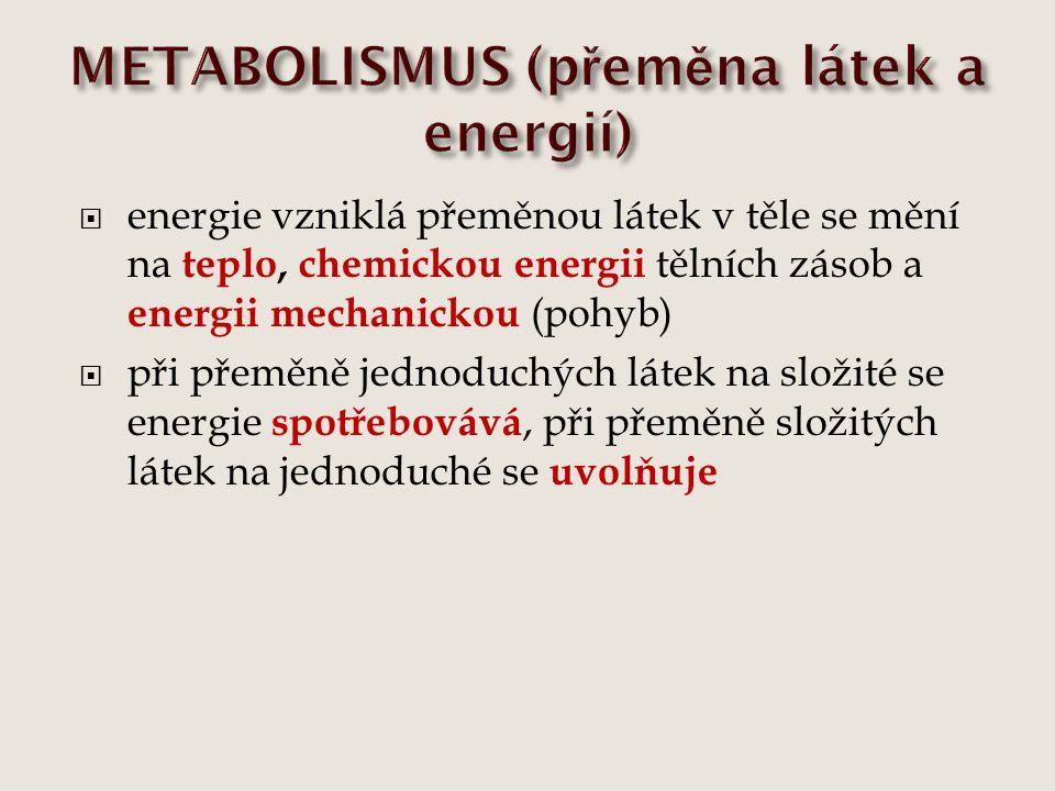 METABOLISMUS (přeměna látek a energií)