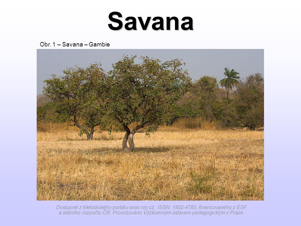 Savana Obr. 1 – Savana – Gambie