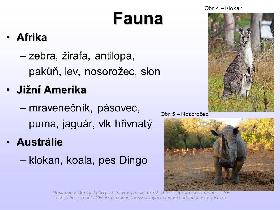 Fauna Afrika zebra, žirafa, antilopa, pakůň, lev, nosorožec, slon