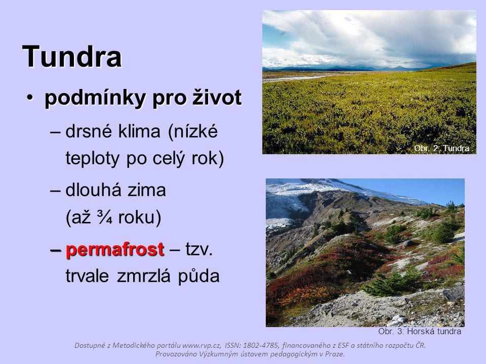Tundra podmínky pro život drsné klima (nízké teploty po celý rok)