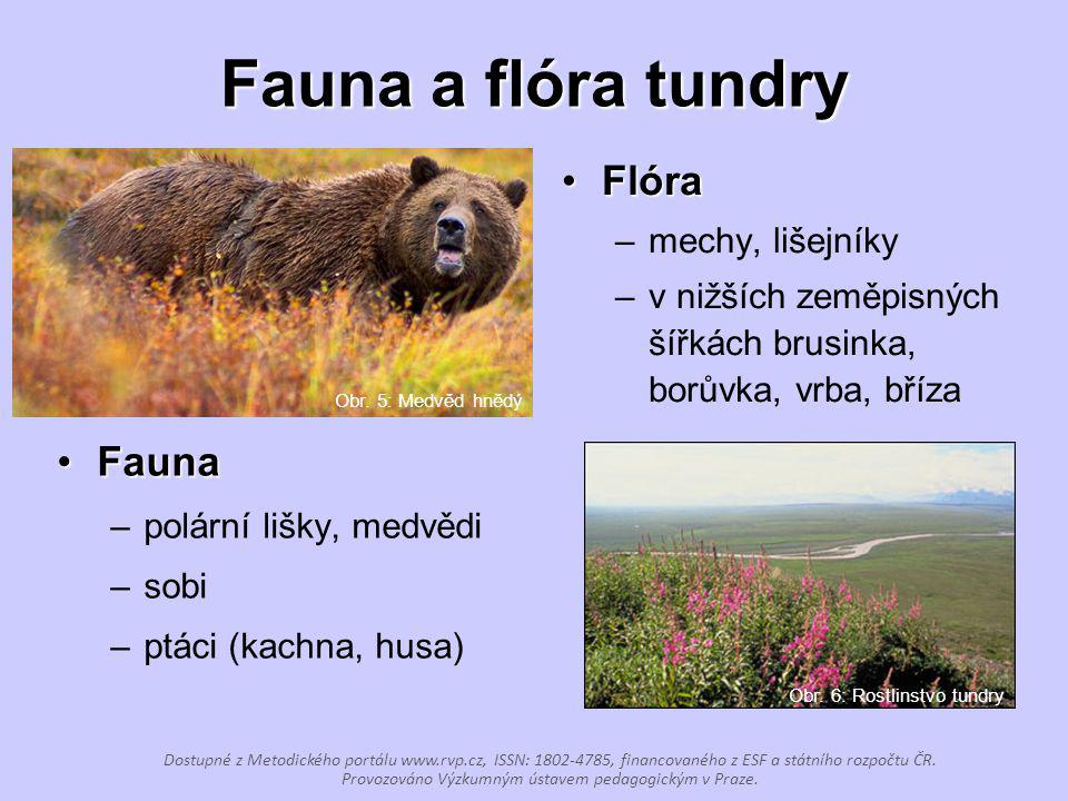 Fauna a flóra tundry Flóra Fauna mechy, lišejníky