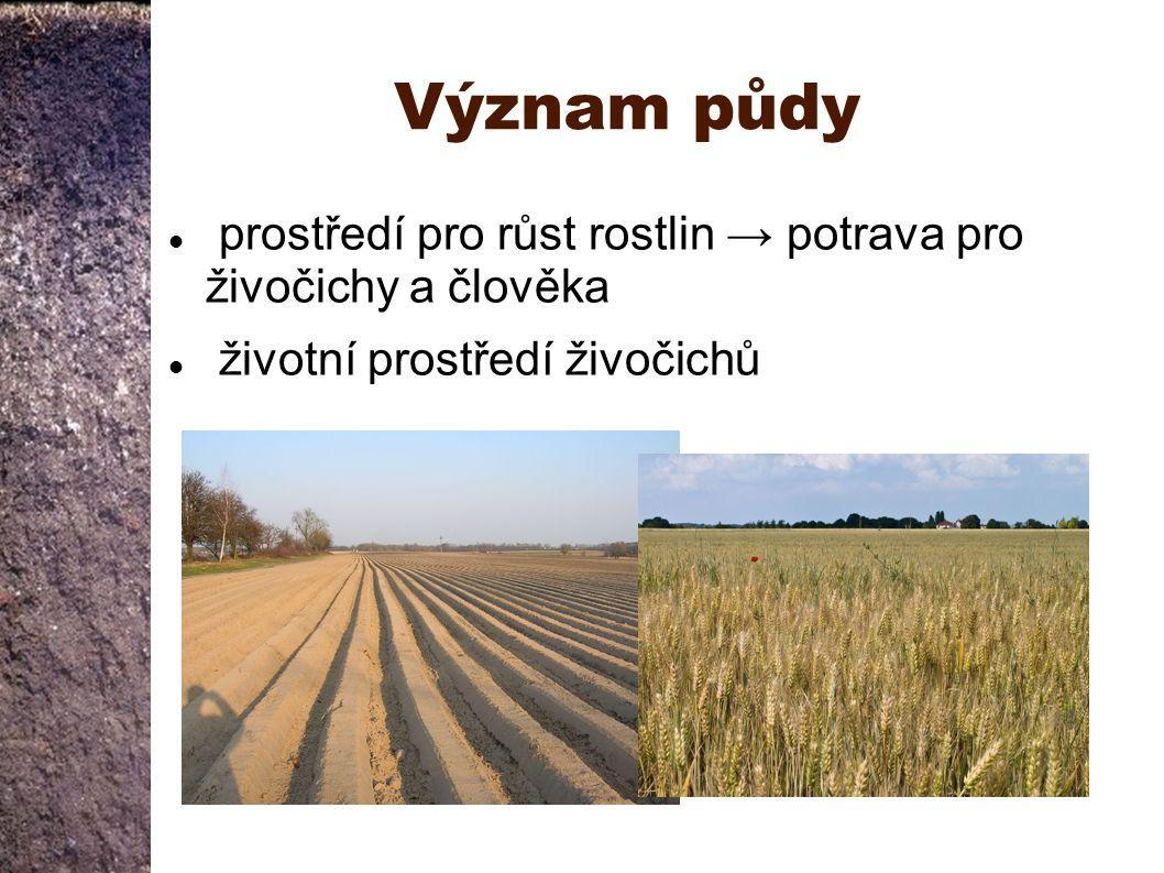 Význam půdy prostředí pro růst rostlin → potrava pro živočichy a člověka.