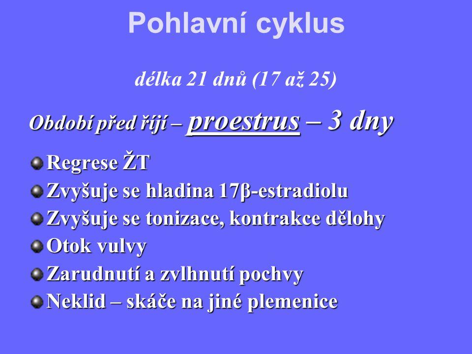 Pohlavní cyklus délka 21 dnů (17 až 25)